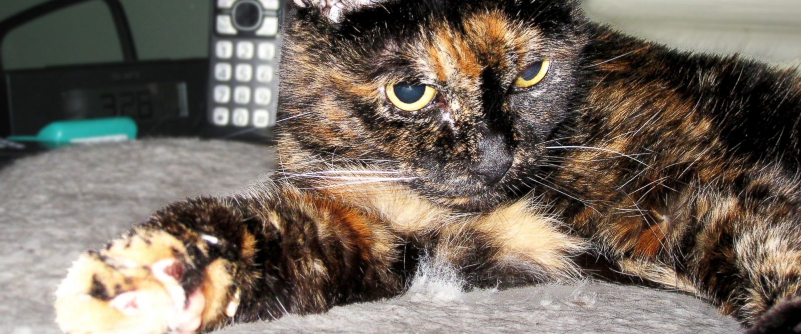 PHOTO: Tiffany Two, recognized by Guinness as the worlds oldest living cat, turned 27 on March 13, 2015.