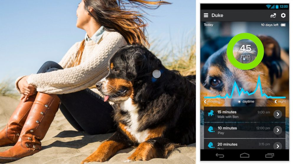PHOTO: The WhistleGPS device attaches to your dogs collar and sends updates throughout the day to your smartphone.