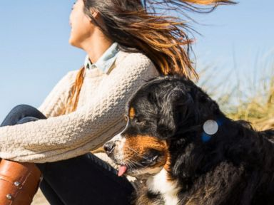 WhistleGPS Device Tracks Pet While Owners are Away