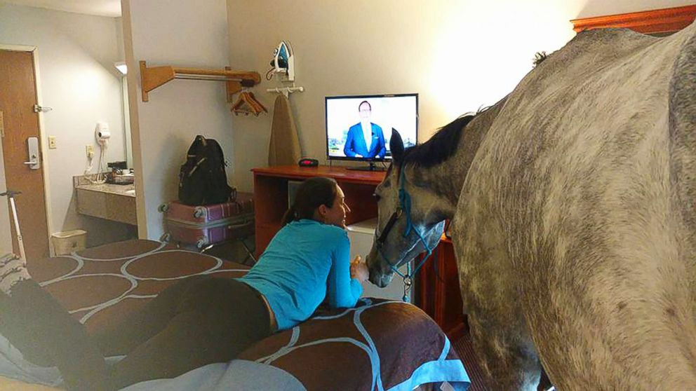 Woman tests the limits of hotel's pet policy by bringing in her horse