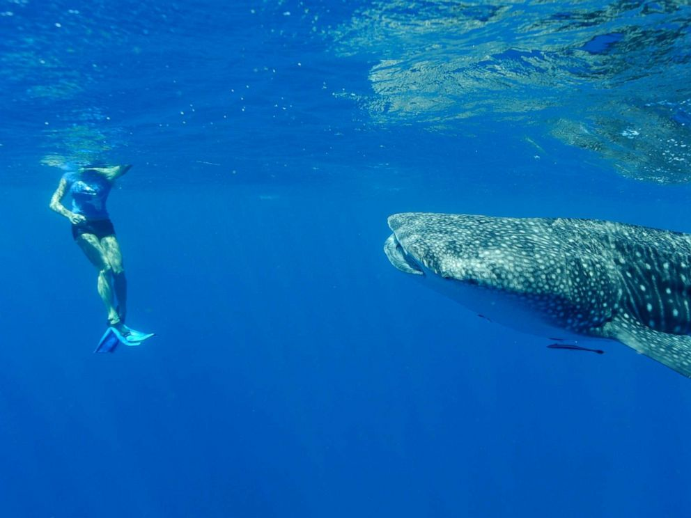 PHOTO: A tourist watches a whale off the coast on April 22, 2012, in Ningaloo Reef, Western Australia.