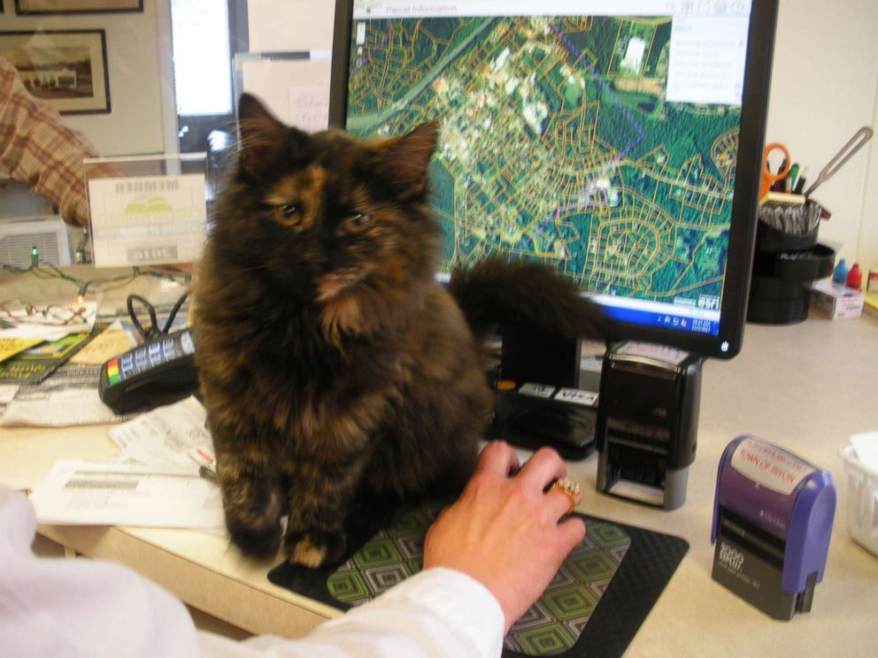 PHOTO: The dispatchers posted pictures to Facebook in hopes of tracking down an owner, to no avail.