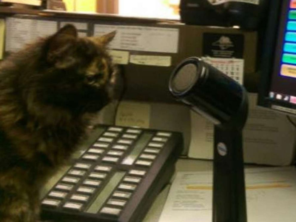 PHOTO: When a stray kitten wandered up to the police department in Tryon, North Carolina, they took her in.
