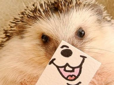 Photos: Marutaro the Hedgehog's Daily Dose of Fun