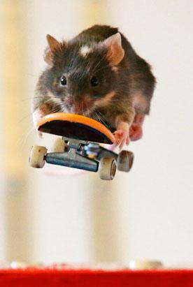Amazing Surfing and Skating Mice!!