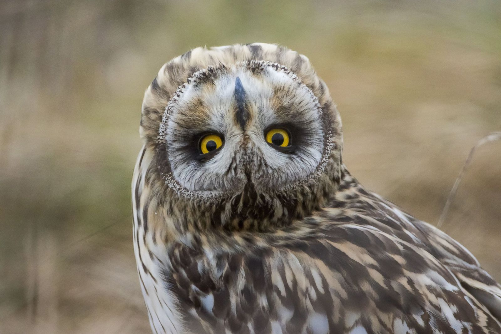 Image of: Owl Abc News Gocom Amazing Animals From Around The World Photos Abc News
