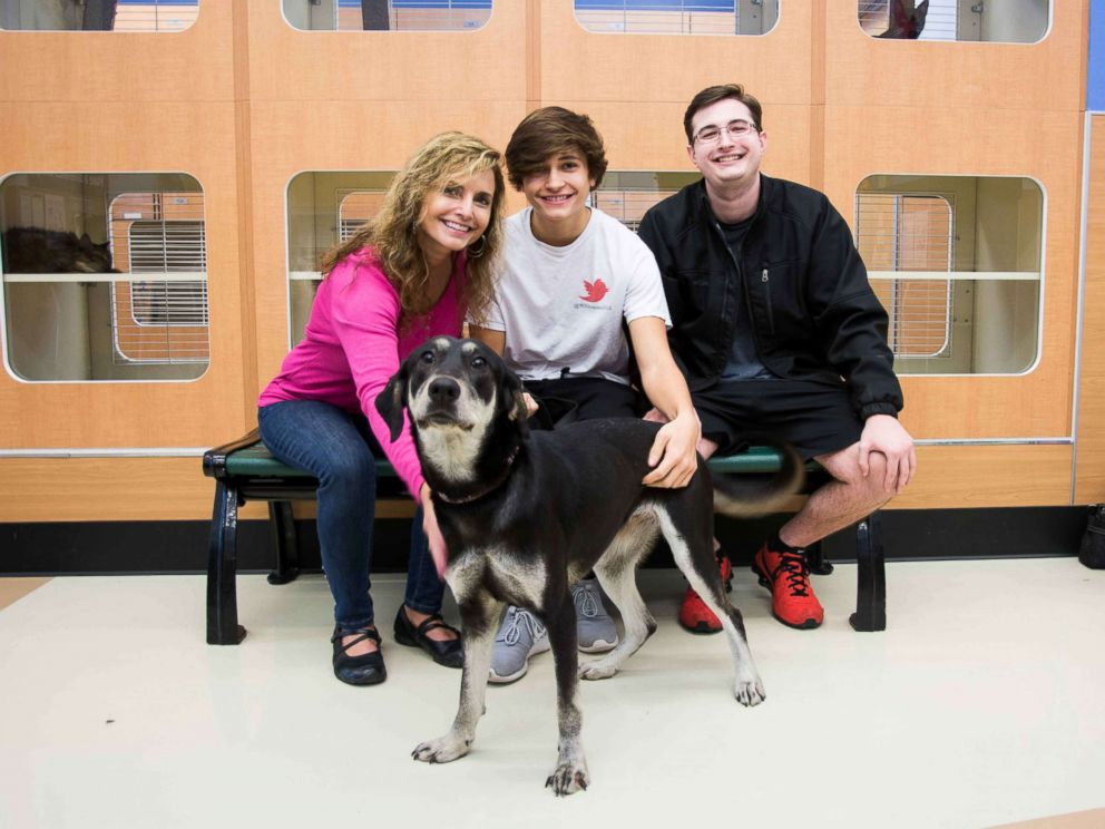 PHOTO: From Nov. 18 to 25, the dogs will get a break from the shelter to enjoy their new families.