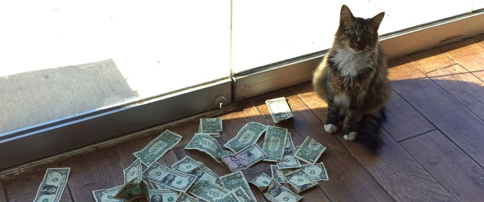 """PHOTO: Sir Whines A Lot, also known as the """"Cashnip Kitty,"""" snatches dollar bills from locals who offer the money through the slot on the door of GuRuStu, a full service marketing firm in Tulsa, Okla."""