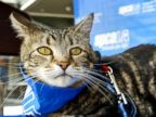 Brave Cat Nabs Hero Dog Award