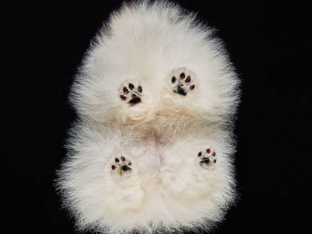 A dogs paws are seen in this photo. <p itemprop=