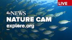 LIVE Stream - Natura Cam