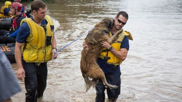 ht austin firefighter dog rescue kb 131101 16x9 608 PHOTO: Austin Firefighters Rescue Dog From Flash Floods