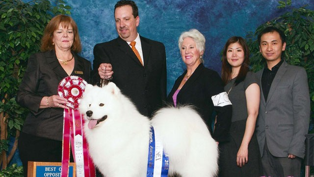 PHOTO: Taken at Samoyed Nationals in October 2012. In the photo from left to right are:  The Judge, Robert Chaffin (the Handler), Lynette Blue, Evy Widajaj  and her husband, Jonathan.