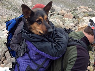 Injured Dog Rescued From Mountain