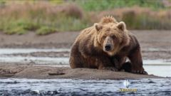 VIDEO: Disneynatures new film follows a mother bear and her two cubs as they brave the Alaskan wilderness.