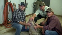 Wrangling Alligators with Gator Whisperers