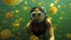Exploring Palaus Mysterious Jellyfish Lake