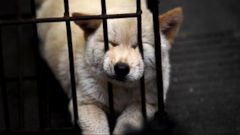 Celebs Take on Chinese Dog Meat Festival