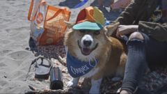 Hundreds of Corgis Have a Day at the Beach
