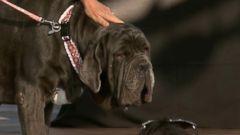 VIDEO: Worlds Ugliest Dog Contest winner announced