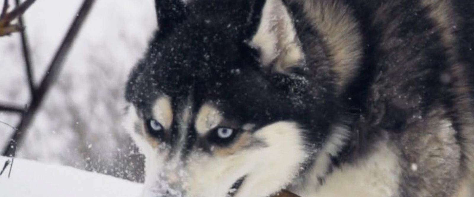 VIDEO: Dog sledding, another sport facing doping scandals, abuse allegations