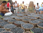 Doubts About Acai Do Not Mute Market