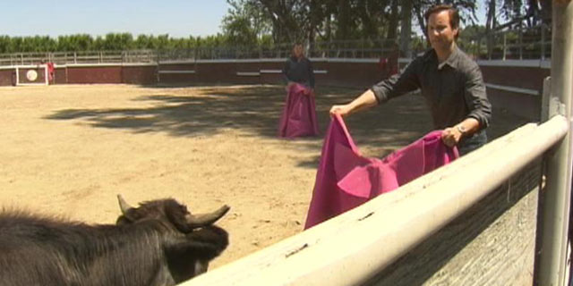 PHOTO: ABC News Neal Karlinsky attends bullfighting school in California.