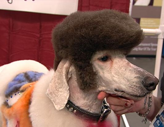 Pet Stylists Super Show - Creative Grooming Competition Photos - ABC News