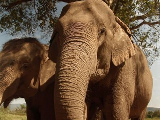 Watch: Elephant Dung Coffee: Smooth, Rich, Expensive