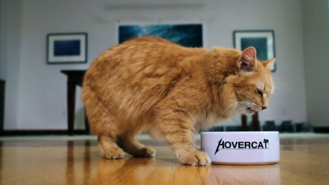 VIDEO: ABC News Dan Harris cat George stars in viral pet adoption ad.
