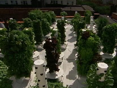 Rooftop Garden Deluxe