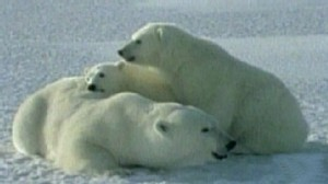 Climate Clash