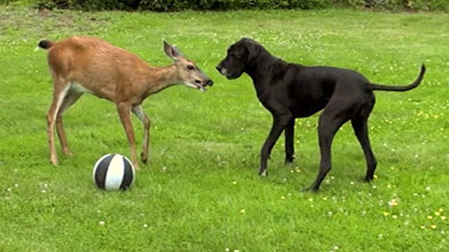Video: Cutest Animal Odd-Couples