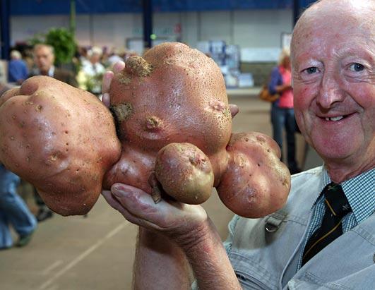 large vegetables 2
