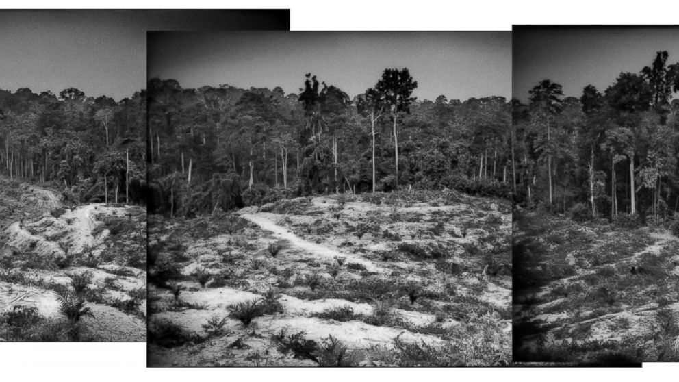 Batek People: Plotting The Course Of Extinction Of The Batek People