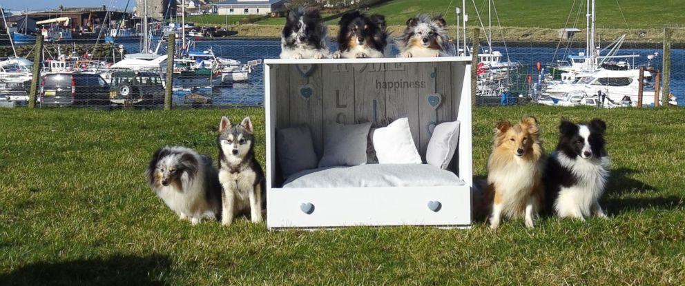 Sheltie Shacks Dog Beds