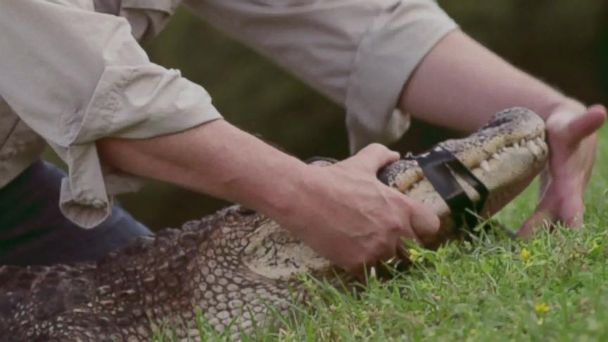 VIDEO: Gator Wrestler Rob Maness Can Handle Washington, New Ad Says