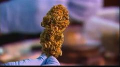 VIDEO: Recreational use comes with certain restriction while sale of the drug remains illegal.