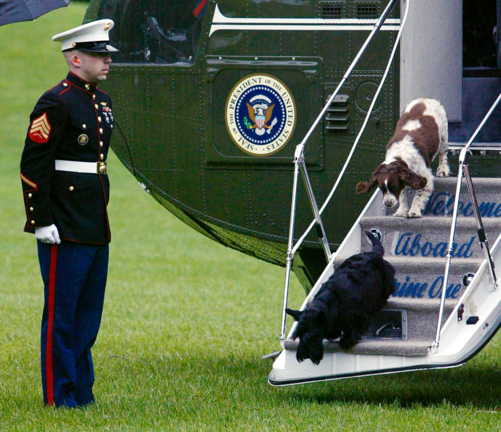 Presidential Pets Paws In The White House Photos Abc News
