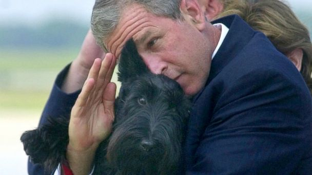 AP george bush barney jef 140924 16x9 608 Republicans Try to Cash in on Obamas Latte Salute