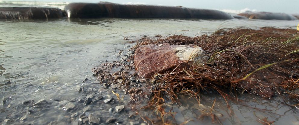 PHOTO: Oil coats plants and rocks as high winds and waves caused the cancellation of cleanup operations on the beach, July 7, 2010, in Port Fourchon, La.