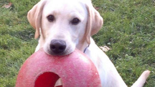 HT john kerry new dog puppy ben sk 131127 16x9 608 John Kerry Is Getting a New Puppy