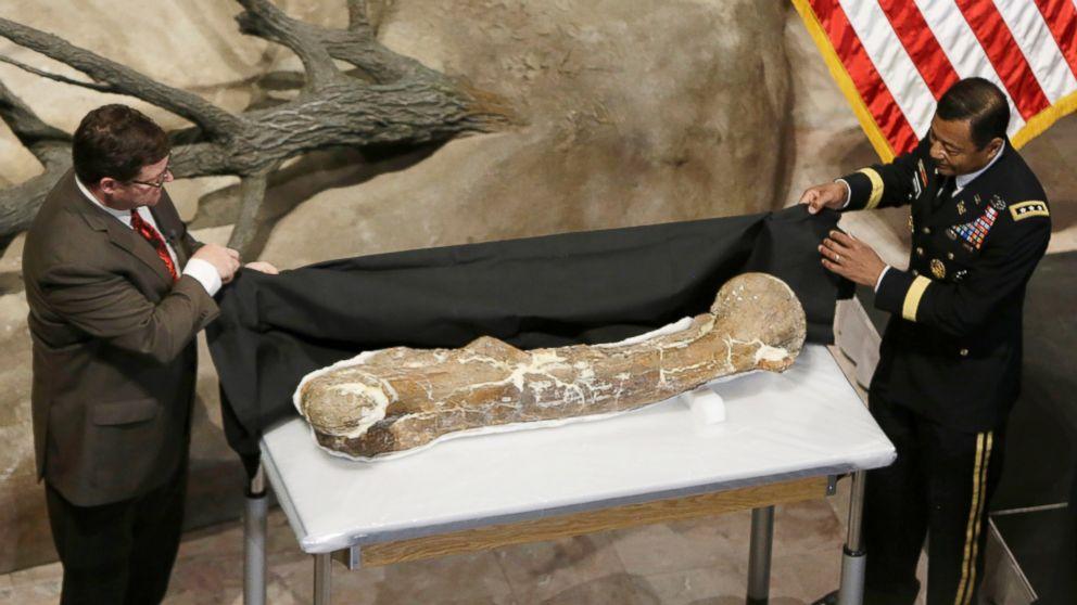 PHOTO: Tyrannosaurus Rex Fossil Unveiled