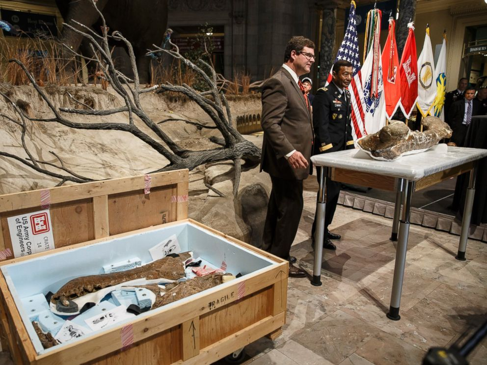 PHOTO: Smithsonian National Museum of Natural History Director Kirk Johnson, left, and Lt. Gen. Thomas Bostick unveil the fossilized bones of a Tyrannosaurus rex during a ceremony at the museum in Washington, April 15, 2014.