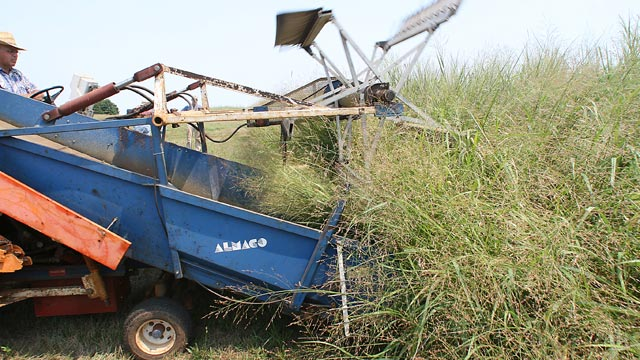 PHOTO: Steve Gulick, research specialist, drives a harvester through a plot of switchgrass which was planted in 1994.