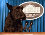 PHOTO: Barney stands at the podium usually reserved for the Press Secretary during a visit Aug. 11, 2004, to the White House Press Briefing Room.