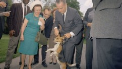 PHOTO: Lyndon Johnson is seen holding a beagle dog's ears up, in this undated photo, provided by the University of Texas Libraries.