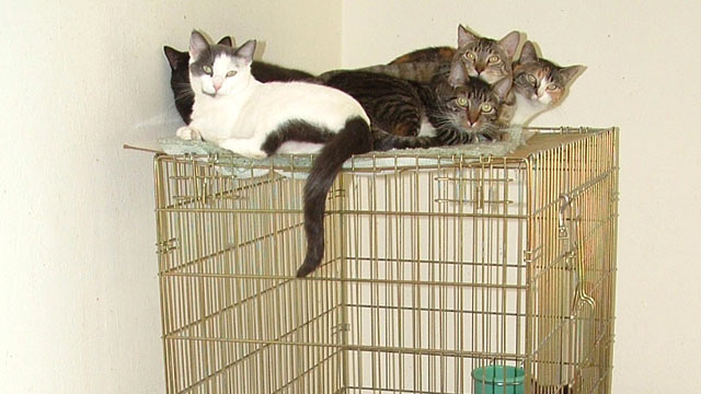 PHOTO: Jan Van Dusen beats the IRS after rescuing dozens of feral cats.J