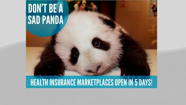 ht sad panda float kb 130927 16x9 608 Obamacares Newest Mascots: Adorable Baby Animals
