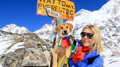 PHOTO: Rupee, the first dog ever officially recorded at the base camp of Mt. Everest, undertook the grueling challenge against all odds after being rescued by Joanne Lefson from a dump site in Ladakh, Northern India.
